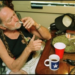 American country singer Willie Nelson takes a drag off a joint while relaxing at his home in Texas, 2000s. A large amount of marijuana is spread out on the table before him (Photo by  Liaison/Getty Images) 376612_03_WILLIE country music musician Drugs & Alcohol Abuse stars at leisure stars at home mug coffee cup table braids pigtails hairstyle marijuana photograph North America American male T1071645